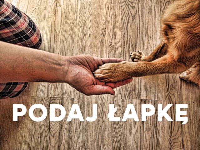 Podaj łapkę – zbiórka narzecz sosnowieckiego schroniska dla zwierząt